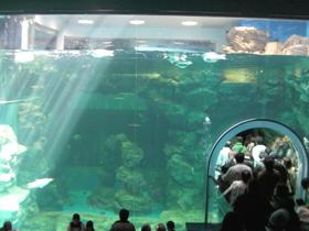 ペンギンプール(右下は水中トンネル)