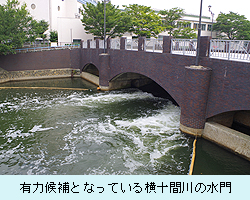 有力候補となっている横十間川の水門
